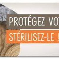 Campagne stérilisation des chats errants